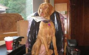 Staff member, Sadie the dog
