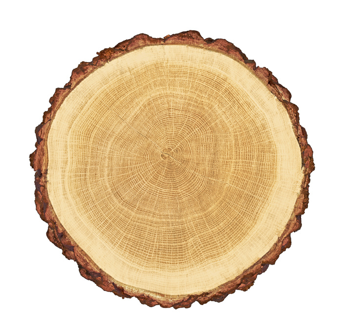 Hardwood Vs. Softwood: Understanding The Difference, Part 2