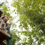 Building A Treehouse: What Type Of Wood You Should Use Where